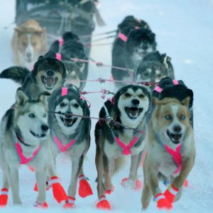 Tustumena 200 Sled Dog Race 2018 Schedule of Events